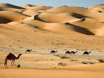 CamelsDubaiDesert.jpg