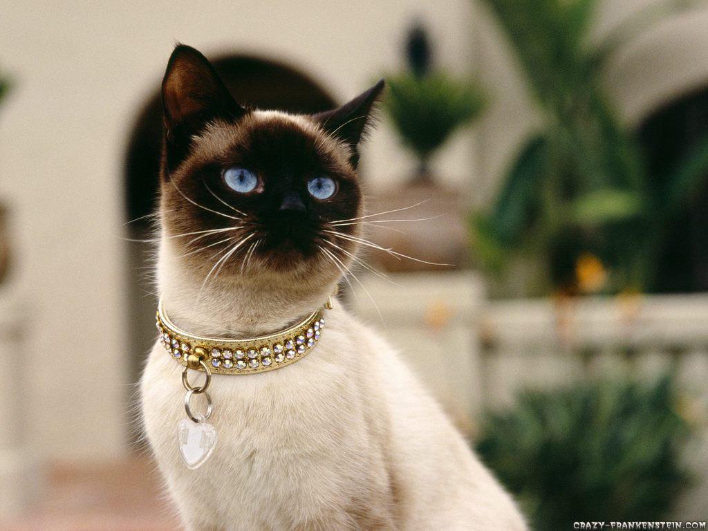 20 Gambar Kucing Dan Anak Kucing Lucu