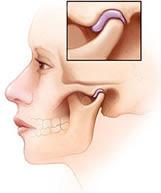 anatomia mandibula Sindrome Dolor Orofacial fisioteria atm