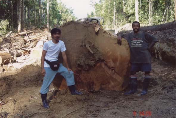 Malacca Teak Iron Wood