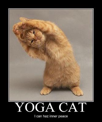 https://i2.wp.com/2.bp.blogspot.com/_gTJMEP-c2fo/SjVZBf1J5hI/AAAAAAAANAk/zqVseCDnZY8/s400/yoga_cat.jpg?resize=227%2C273