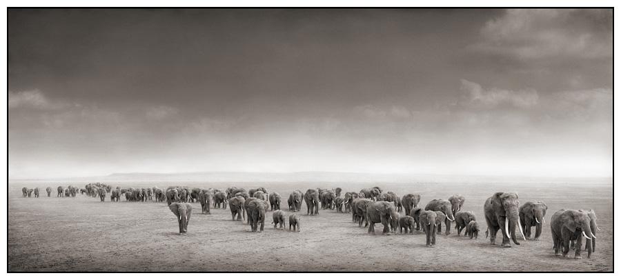 facts around us africas wild animals blackwhite photography