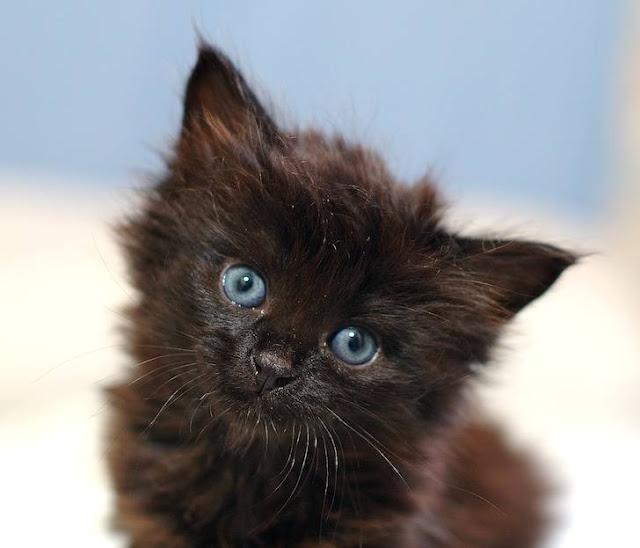 Black Kittens 16