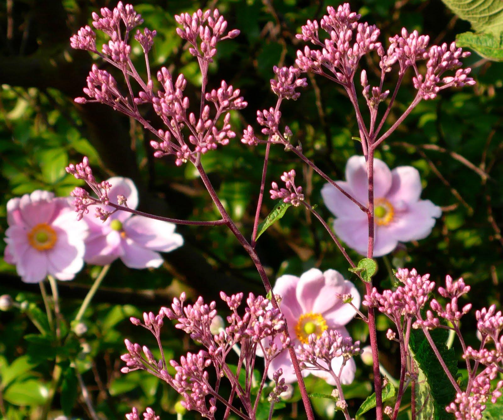 Share My Garden: Late Summer Flowers