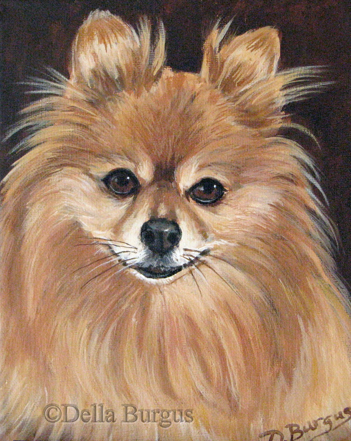 art helping animals  canine art dogs pomeranian dog