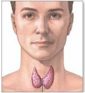 Thyr-gland2