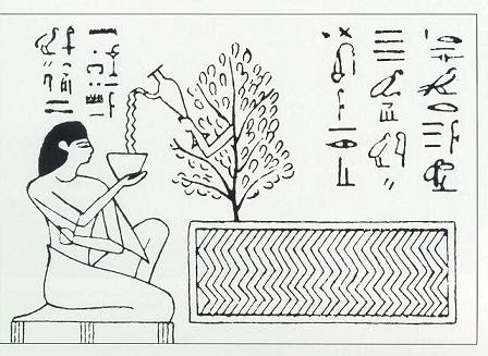 For Posterity: The Tree of Life & King Tut