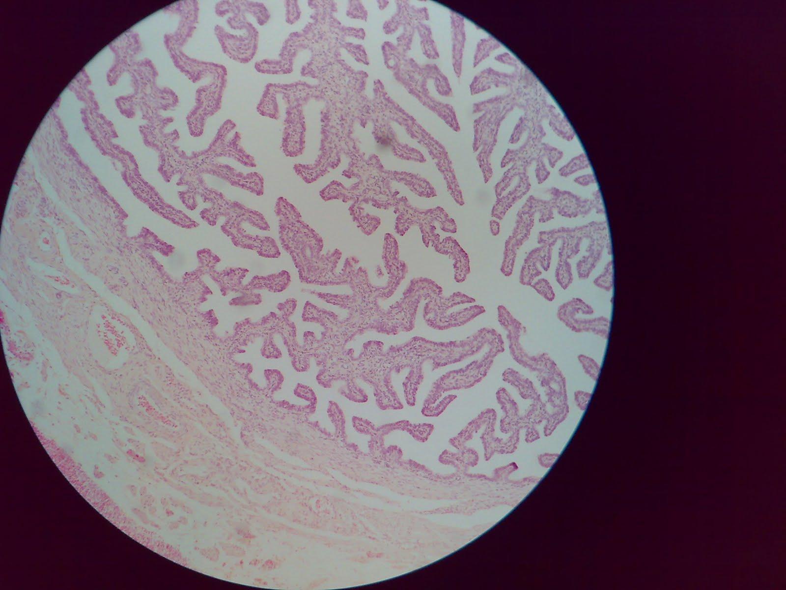 Medical College Stuff: 2nd Year MBBS Histology Slides