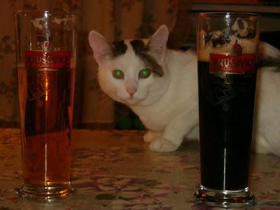 drunk cat pictures