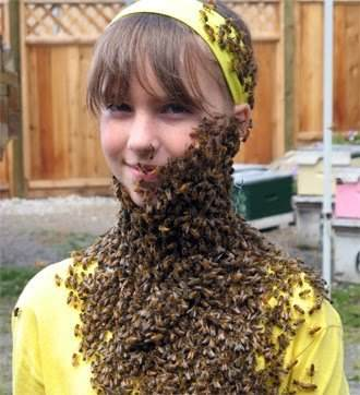 Honey bee beard: 22