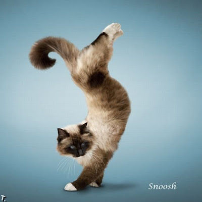 cat pose yoga  14 pics  curious funny photos / pictures