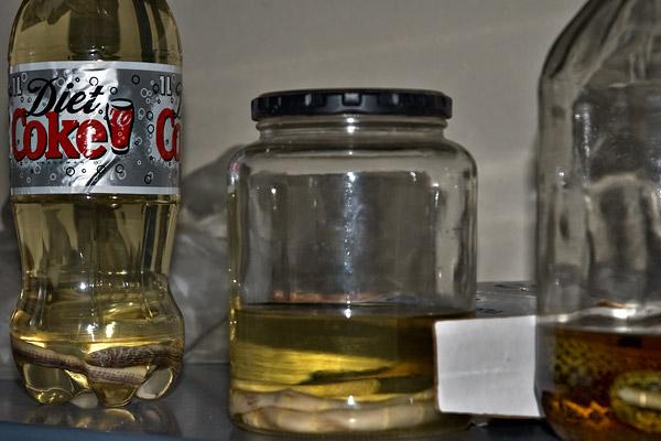 A snake in a diet coke bottle