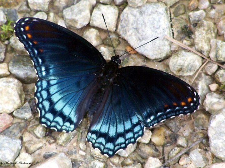 The Most Beautiful things in the world: Beautiful Butterfly  The Most Beauti...