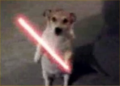 Just LoL: Animals Armed With Lightsaber