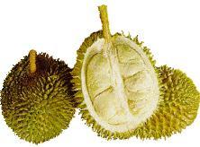 buah buahan, durian, gambar durian