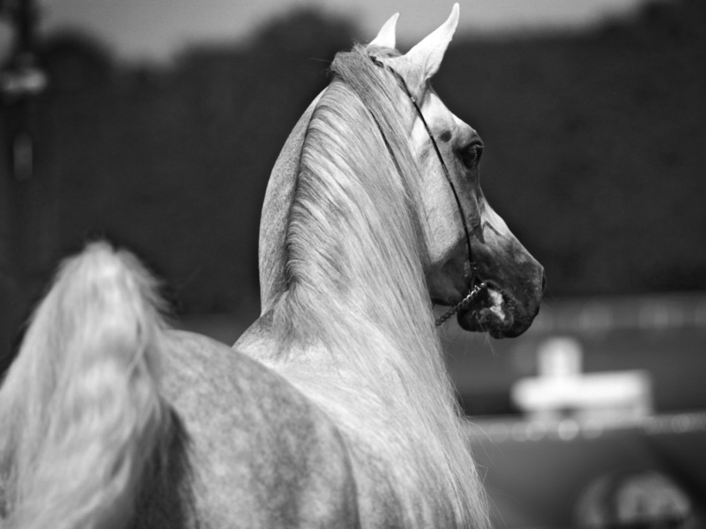 Cheval Training Services: Photos  Cheval Training...