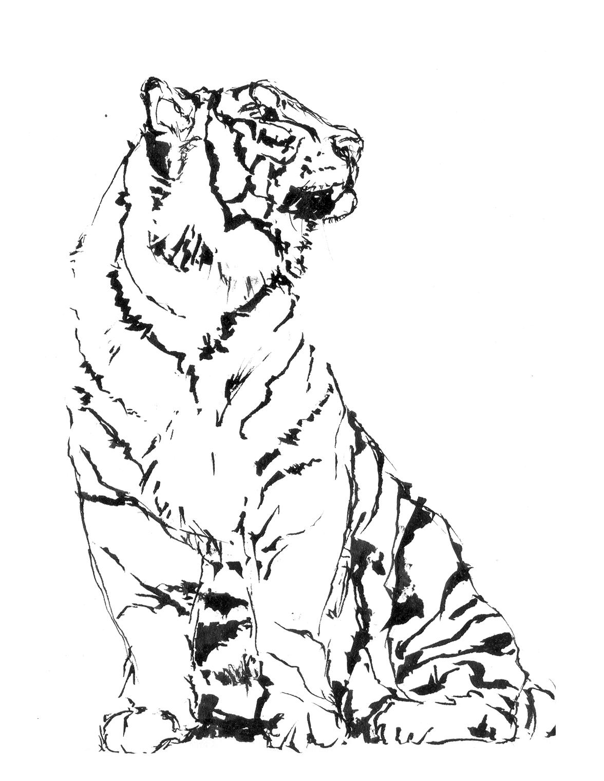 uomo tigre da stampare