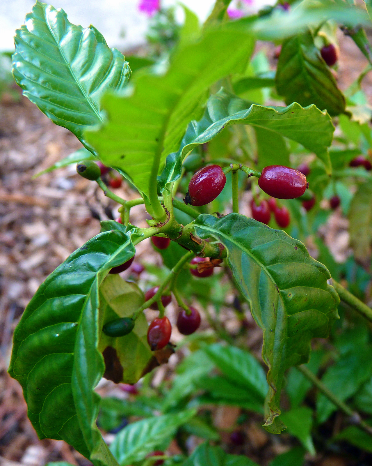 My Florida Backyard: Java Jive