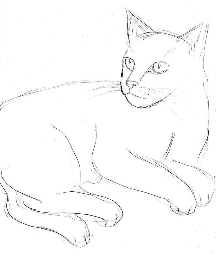 katzen zum zeichnen