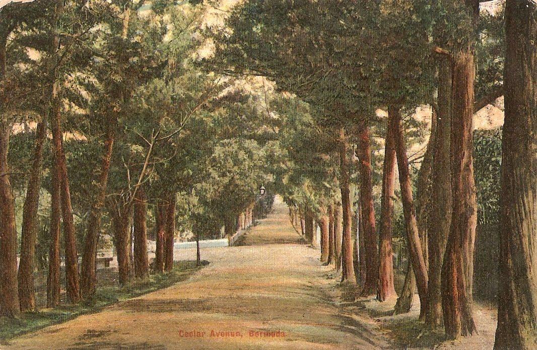 Bermuda History Cedar Avenue Hamilton