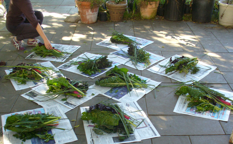 LA Garden Blog : Month By Month Planting Guide for Southern