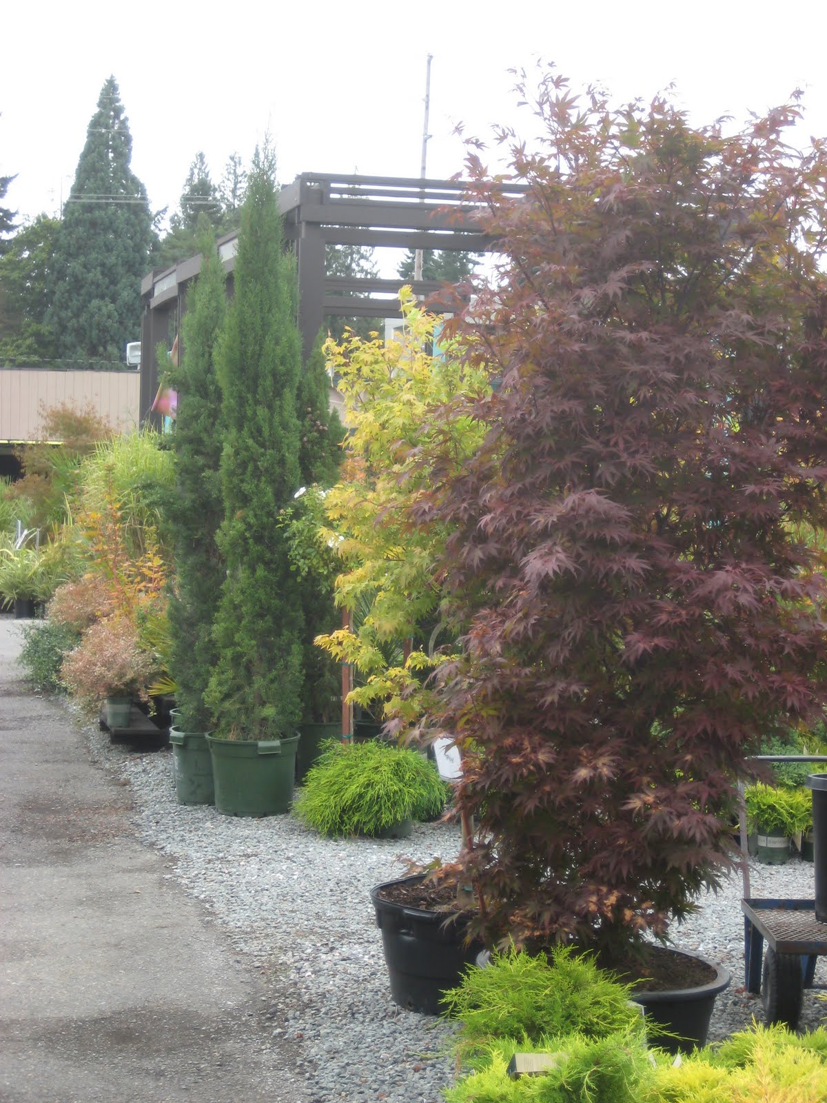 A Long Far View September 2010