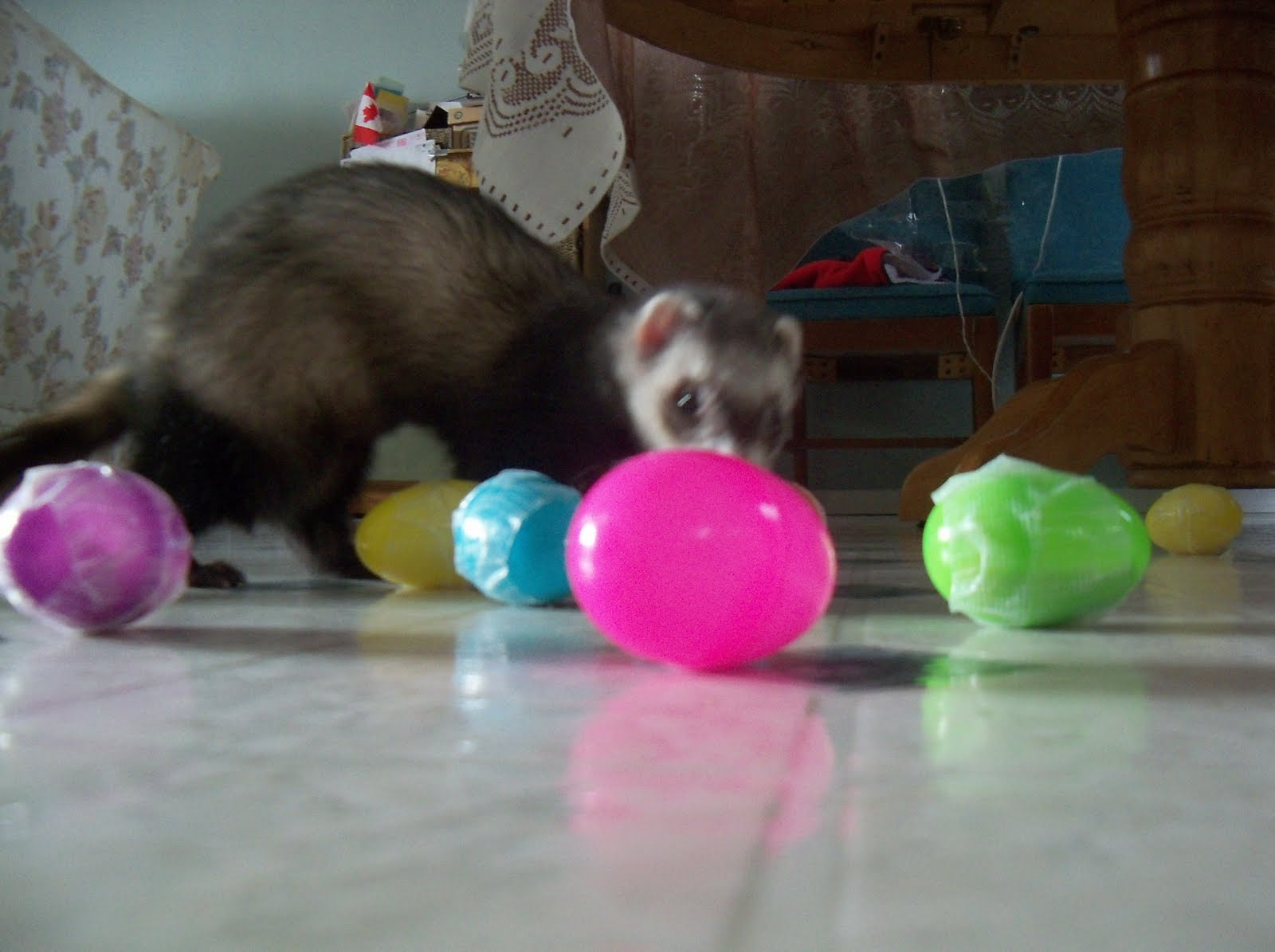 Ferrets In The North More Ferret Toy Ideas