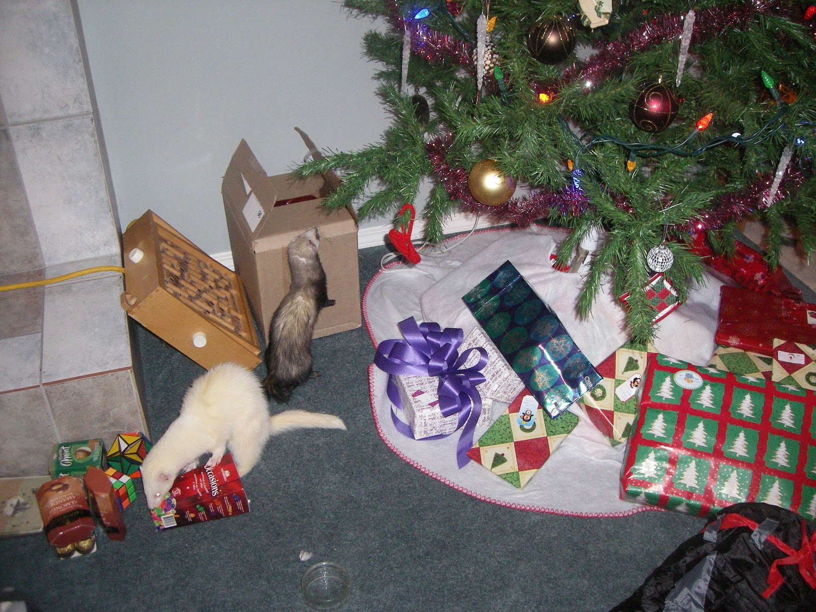 Ferrets In The North Having A Ferret Safe Christmas