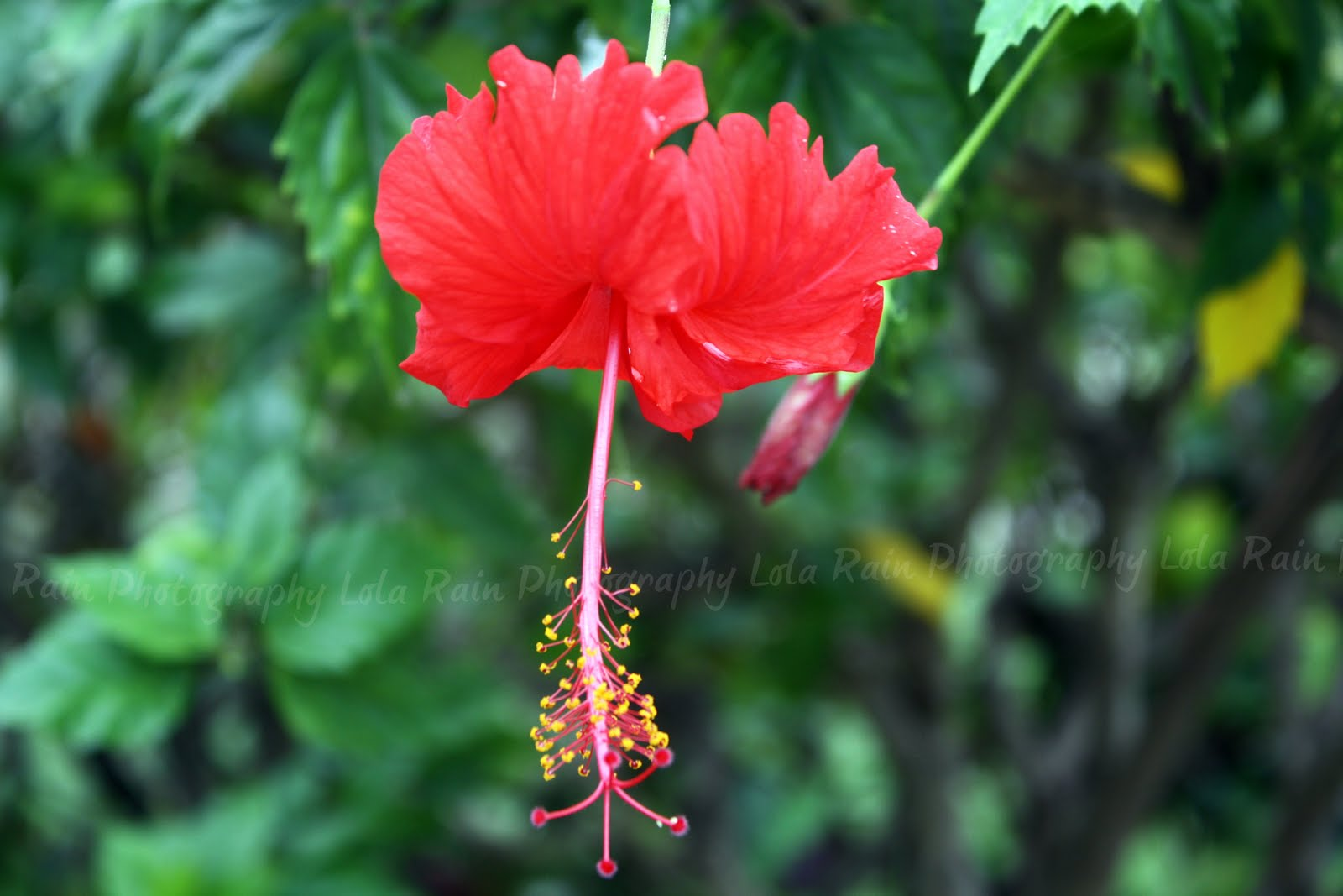 Lovely hawaiian flower images and names top collection of tropical flower names and beautiful flowers izmirmasajfo