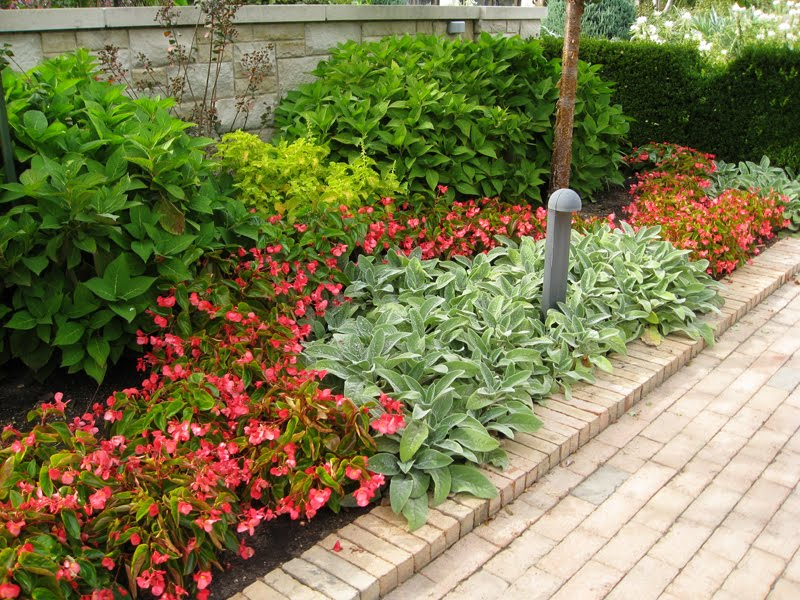 Gardening with turtles crazy autumn color for Wax landscape