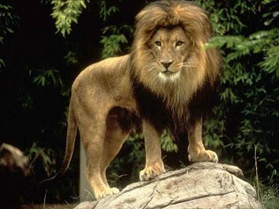 Resultado de imagen de leones escalando