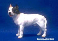 pit bull dog figurine white and fawn