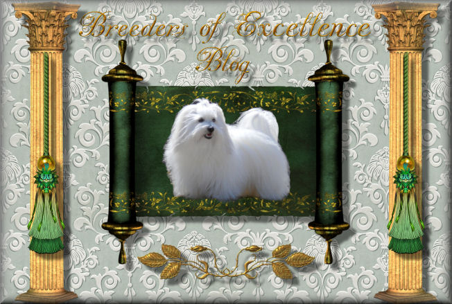 Coton de Tulear Breeders of Excellence/Coton de Tulear Puppies/Coton Breeders