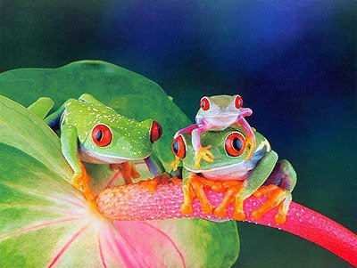 Photos of frogs beautiful and strange not seen before