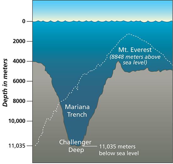 fosas marinas