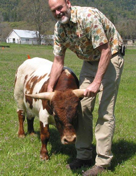 Las mini vacas se ponen de moda en EEUU