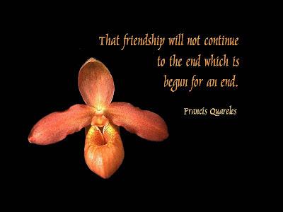 Viva friendship الصداقة