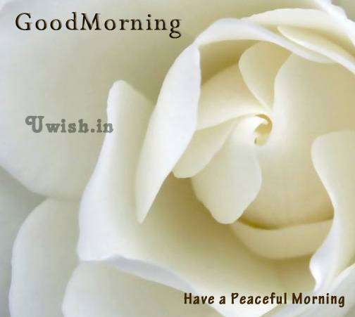 Good Morning wishes and e greeting cards with a gorgeous white flower.   Have a peaceful morning.