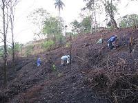 work crew planting trees