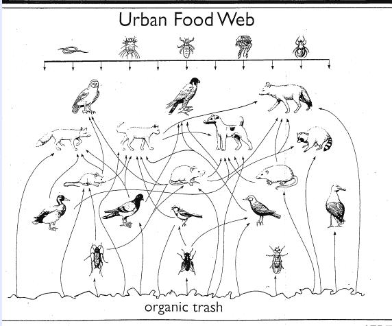 juliayunwonder: tropical rainforest food web diagram