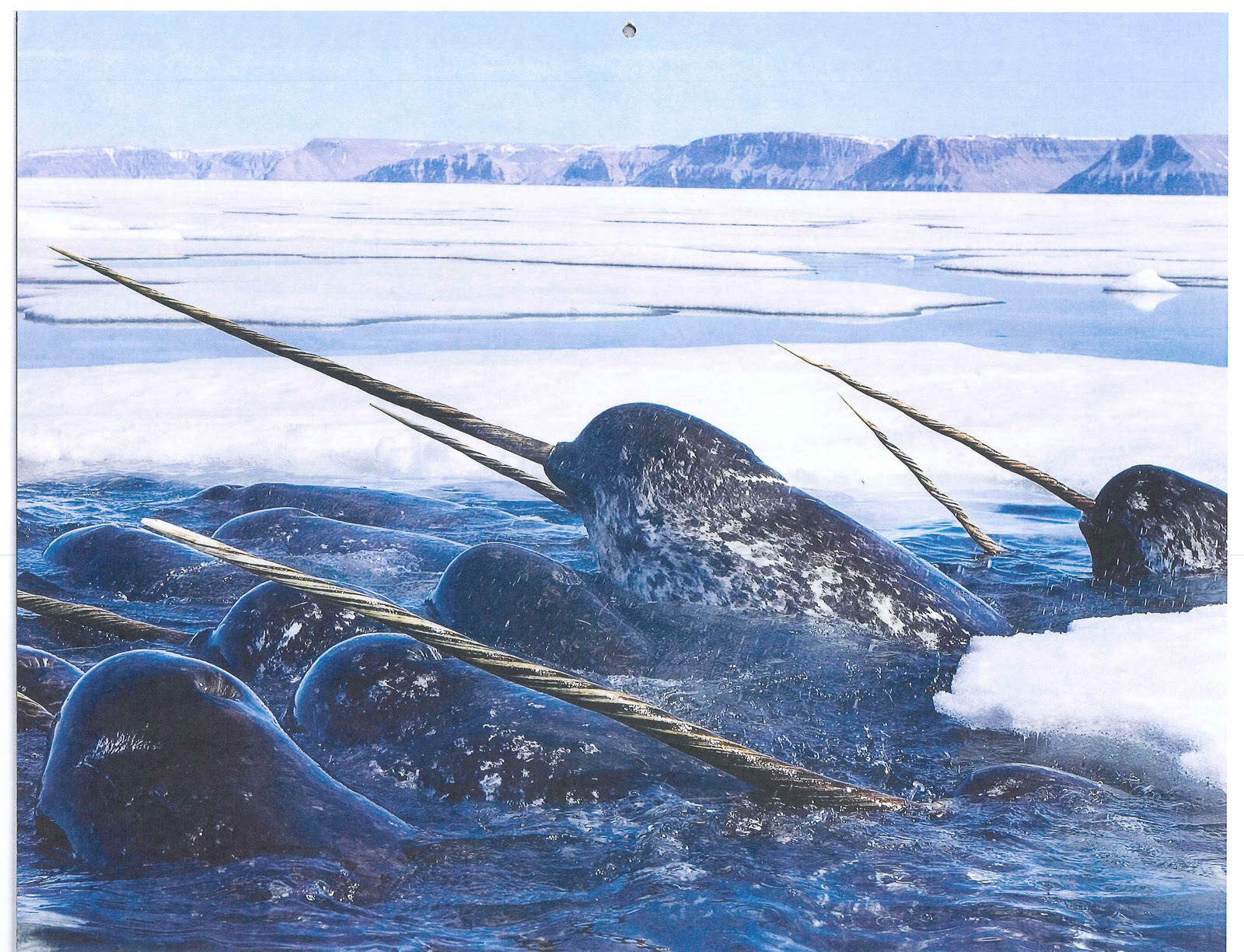 Mary's Be a GoodDog Blog: Narwhal Pod and the National ...