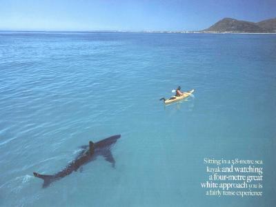Ο Ρόμπερτ στη δεξαμενή με τους καρχαρίες που βγαίνει