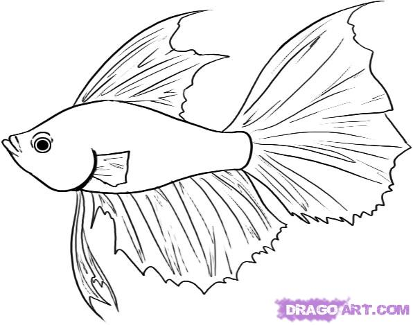 fishes drawing - photo #17