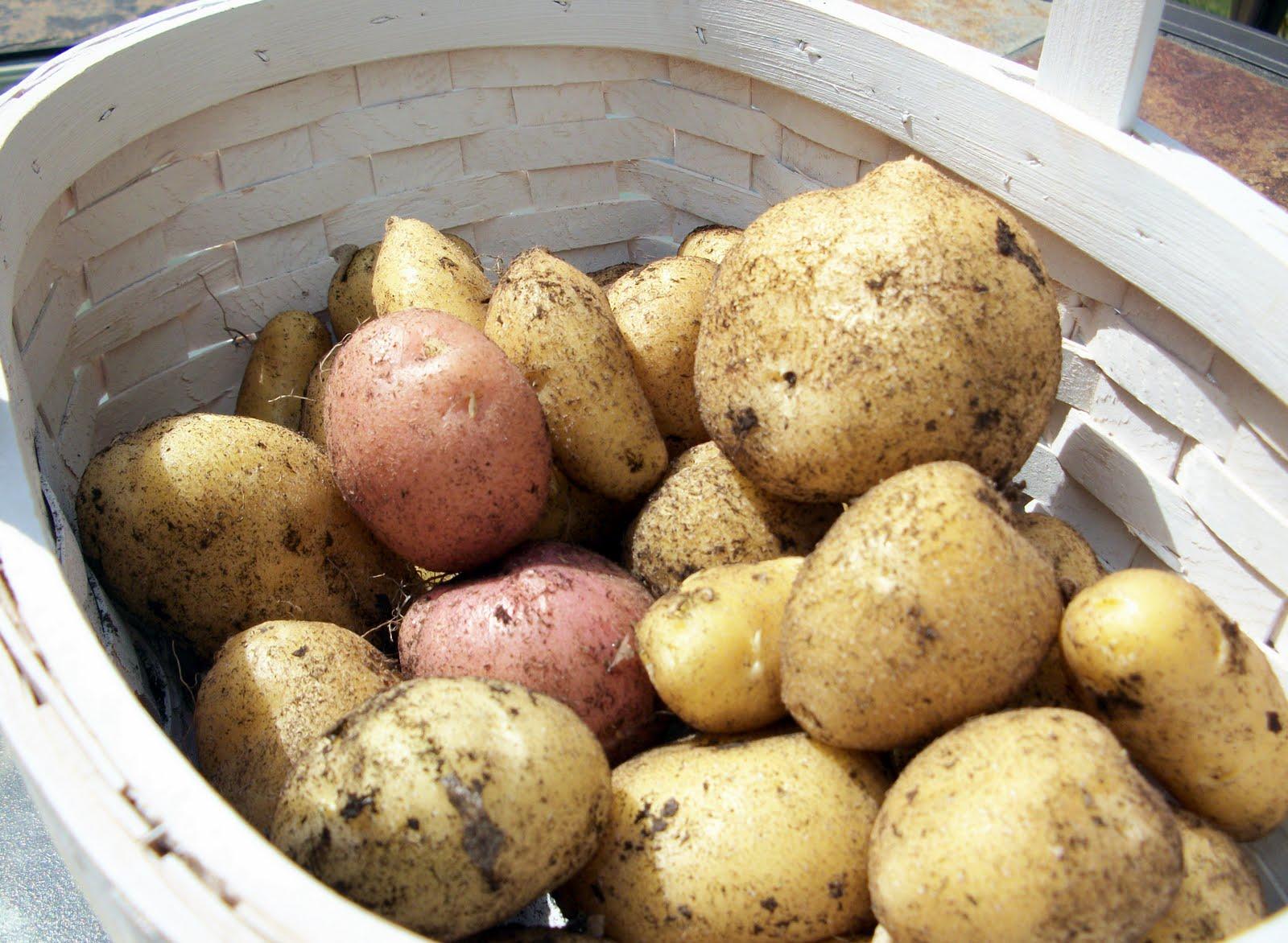 Adventures of Valley Writer: Patio Potatoes