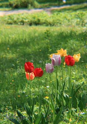 "Green Thumb Sunday – ""A Hidden Garden in the City"""