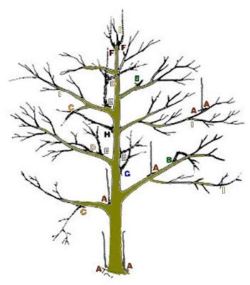 que faire ce mois dans mon jardin annetois taille des arbres p pins. Black Bedroom Furniture Sets. Home Design Ideas