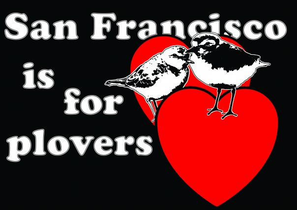San Francisco is for Plovers