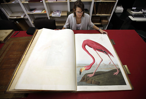 The Most Expensive Book John James Audubon S Birds Of America