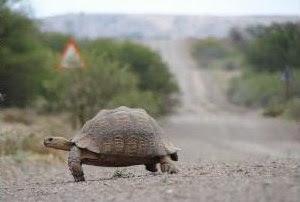 Tortoise's way of making money