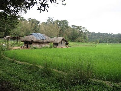 Paddy Fields in Kuruva Island, Wayanad